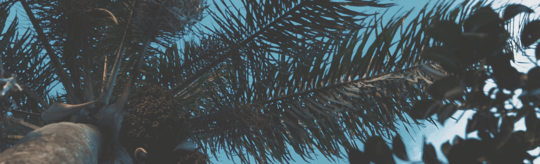 foto de palmera en casona del lago